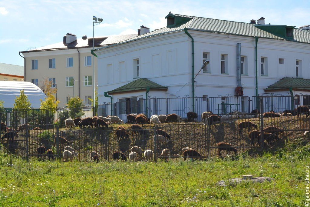 знакомство татар в мечетях казани