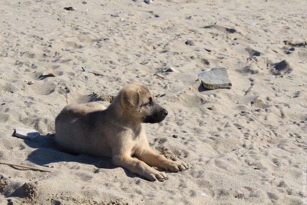 Фото дикий пляж джубги